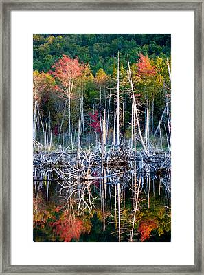 Autumn At Moosehead Bog Framed Print by Brent L Ander