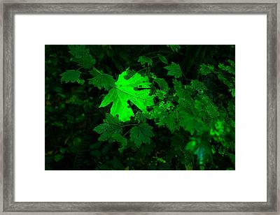 Autumn Attire Framed Print by Jeff Swan