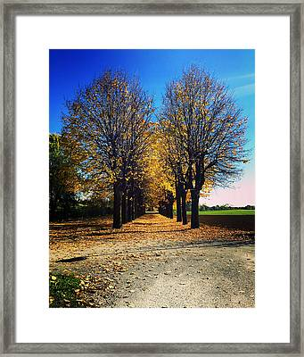 Autumn Avenue Framed Print by Niki Mastromonaco
