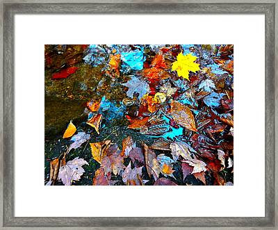 Autumn B 2015 124 Framed Print