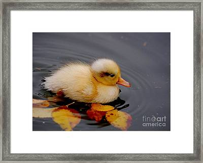 Autumn Baby Framed Print by Jacky Gerritsen