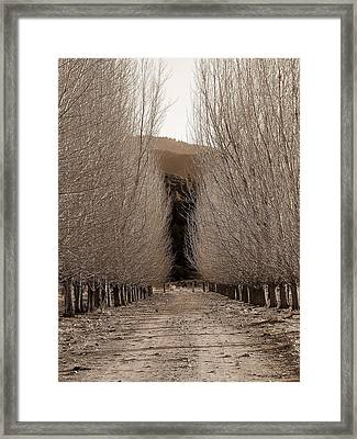 Autumn Bares Her Trees Framed Print by Jeff Lowe