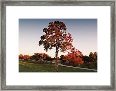 Autumn Beauty Framed Print by Milena Ilieva