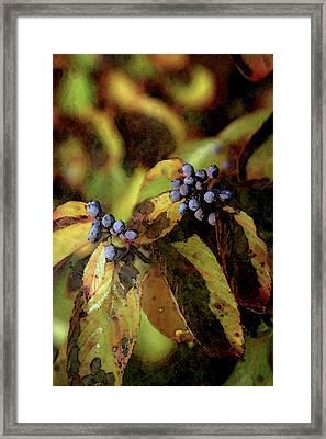 Autumn Berries 6047 Dp_2 Framed Print