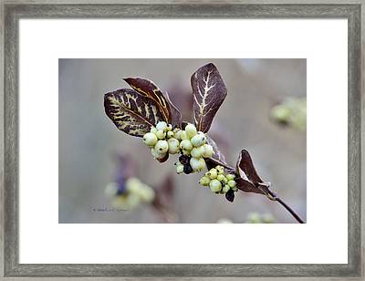Autumn Berries And Foliage Framed Print