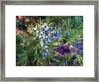 Framed Print featuring the photograph Autumn Berries by Betty Northcutt