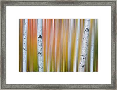 Framed Print featuring the photograph Autumn Birch Abstract by Expressive Landscapes Fine Art Photography by Thom