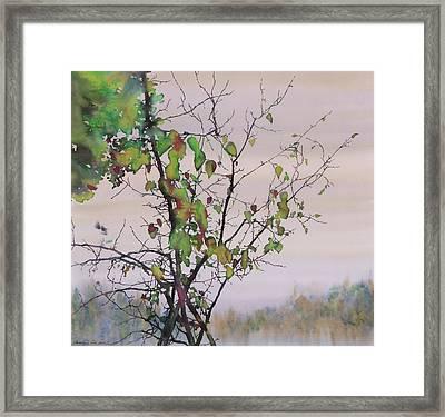 Autumn Birch By Sand Creek Framed Print by Carolyn Doe