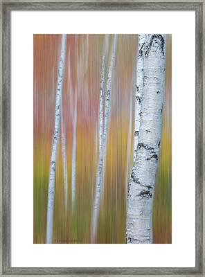 Framed Print featuring the photograph Autumn Birch Impressions by Expressive Landscapes Fine Art Photography by Thom