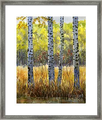 Autumn Birch Trees In Shadow Framed Print by Sharon Freeman
