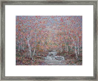 Autumn Birch Trees. Framed Print