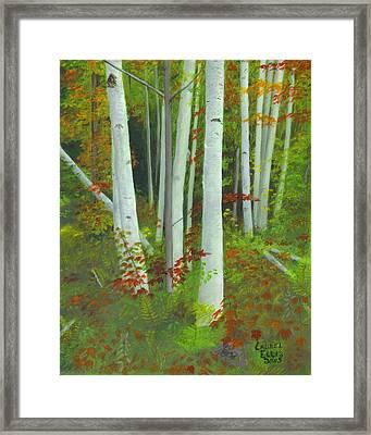 Autumn Birches Framed Print by Laurel Ellis