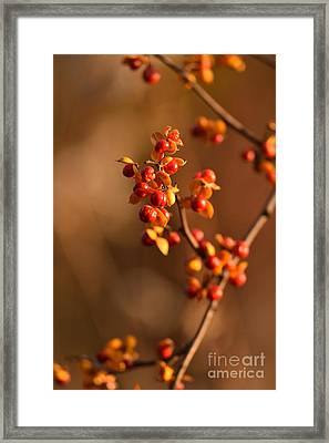 Autumn Bittersweet I Framed Print by Rowena Throckmorton
