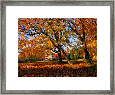 Autumn Blaze Framed Print by Dianne Cowen