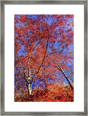 Framed Print featuring the photograph Autumn Blaze by Karen Wiles