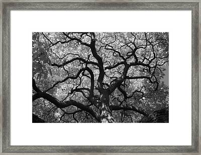 Autumn Bloom Framed Print by Sonja Anderson