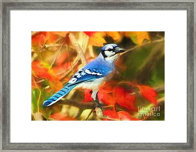 Autumn Blue Jay Framed Print by Tina LeCour