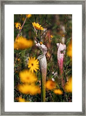 Autumn Bog  Framed Print