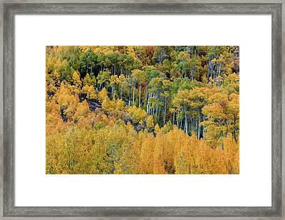 Framed Print featuring the photograph Autumn Bounty by Stuart Gordon