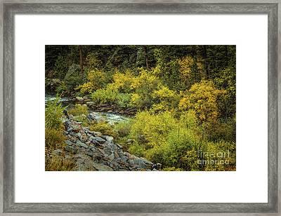 Autumn Bouquet Framed Print by Jon Burch Photography