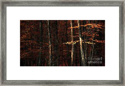 Autumn Branch Framed Print by Svetlana Sewell