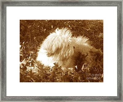 Autumn Breeze 2 Framed Print