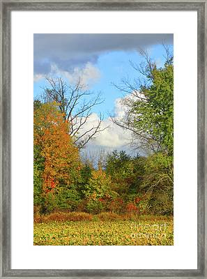 Autumn Breeze Nature Art Framed Print by Robyn King