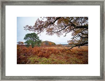 Autumn Brunch Framed Print by Svetlana Sewell