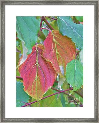 Autumn Bush Leaf Pair     Indiana    October Framed Print