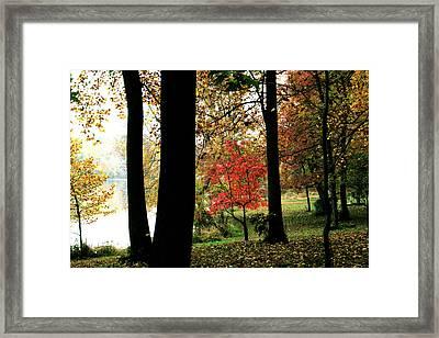 Autumn By The Lake Framed Print by Douglas Barnett