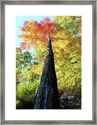 Autumn Canopy Framed Print by Lorraine Zaloom