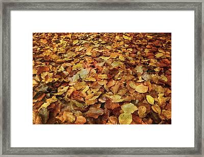 Autumn Carpet Framed Print by Vittorio Chiampan