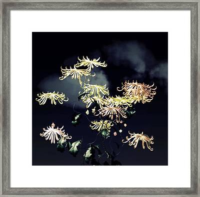 Autumn Chrysanthemums 7 Framed Print