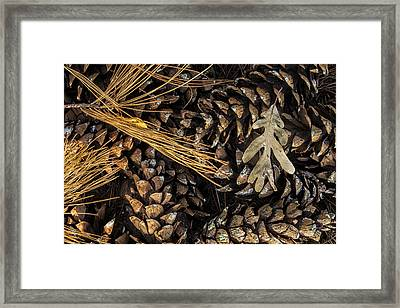 Autumn Collage Framed Print