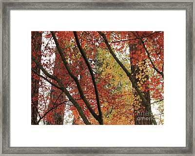 Autumn Color In Spokane Framed Print
