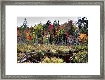 Framed Print featuring the photograph Autumn Color In The Adirondacks by David Patterson