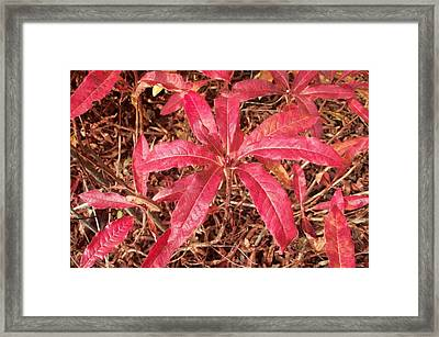 Autumn Color Framed Print by Nancy Pauling