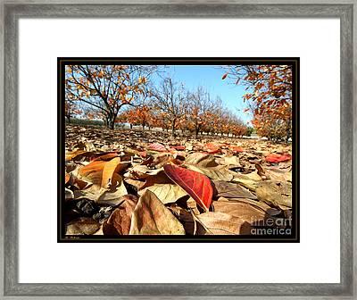 Autumn Colors 04 Framed Print
