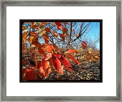 Autumn Colors 06 Framed Print by Arik Baltinester