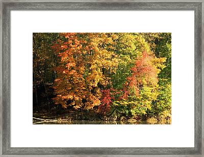 Autumn Colors II Framed Print by Amanda Kiplinger