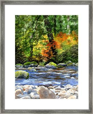 Autumn Colors In A Forest Framed Print by Sharon Freeman