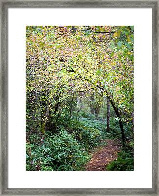 Autumn Colors In The Forest Framed Print