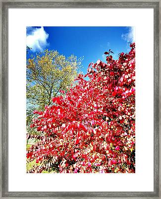 Autumn Colors Of Southern Indiana Framed Print by Scott D Van Osdol