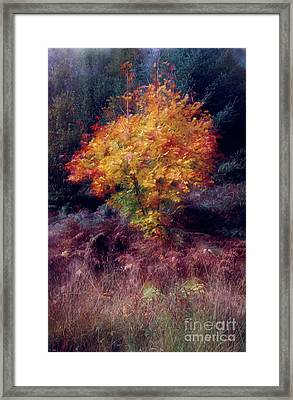 Autumn Colour Framed Print by Janet Burdon