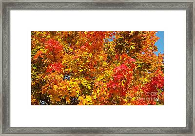 Autumn Colouring Framed Print by Alex Cassels