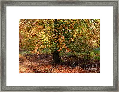 Autumn Colours On Cannock Chase Framed Print