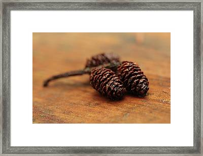 Autumn Cones Framed Print by Connie Handscomb