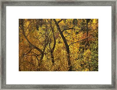 Autumn Cottonwood Thicket Framed Print