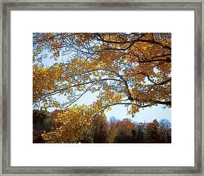 Autumn Cover Framed Print by Jo-Anne Gazo-McKim