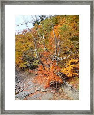 Autumn Creek 4 Framed Print